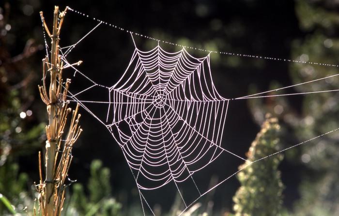 Orb spider web;J Schmidt; 1977